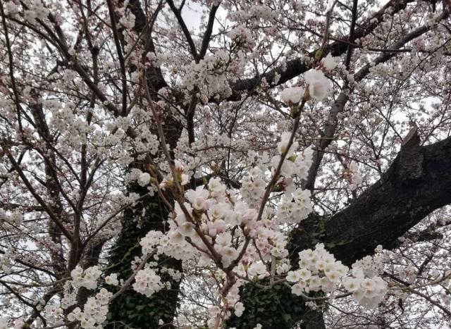 春の訪れとともに